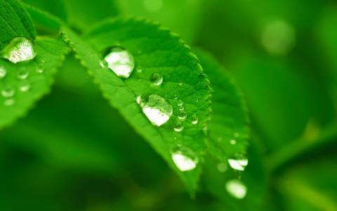 绿色护眼植物意境摄影
