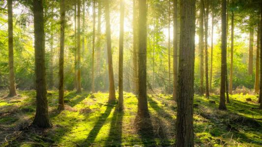 那一抹照射森林的唯美阳