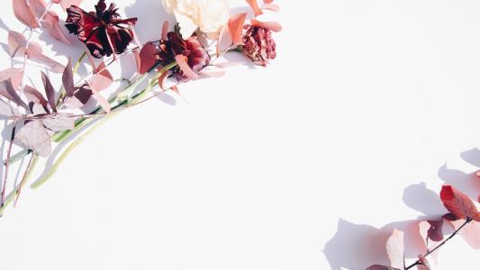 极简创意植物花卉背景