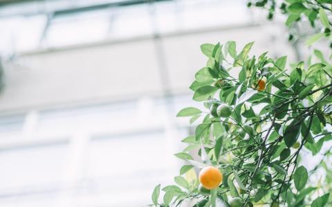 清新养眼的绿色植物