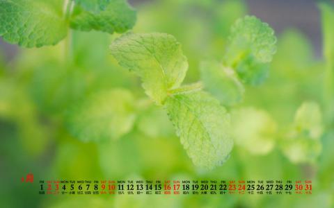 2021年1月绿色护眼薄荷植物日历