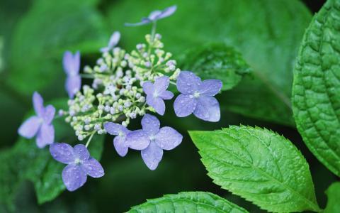 紫色的花朵植物